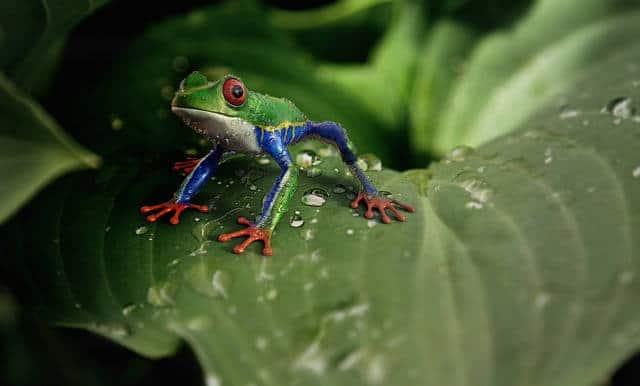 Frosch ist in die Wildkamera Falle getappt